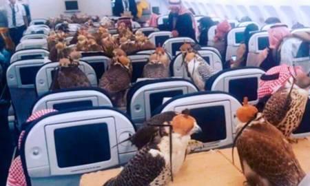Pagó 80 pasajes de avión para sus mascotas