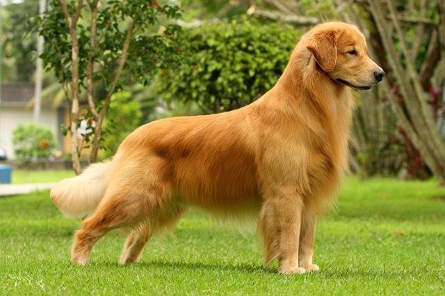 El perro que enterneció a todo el mundo