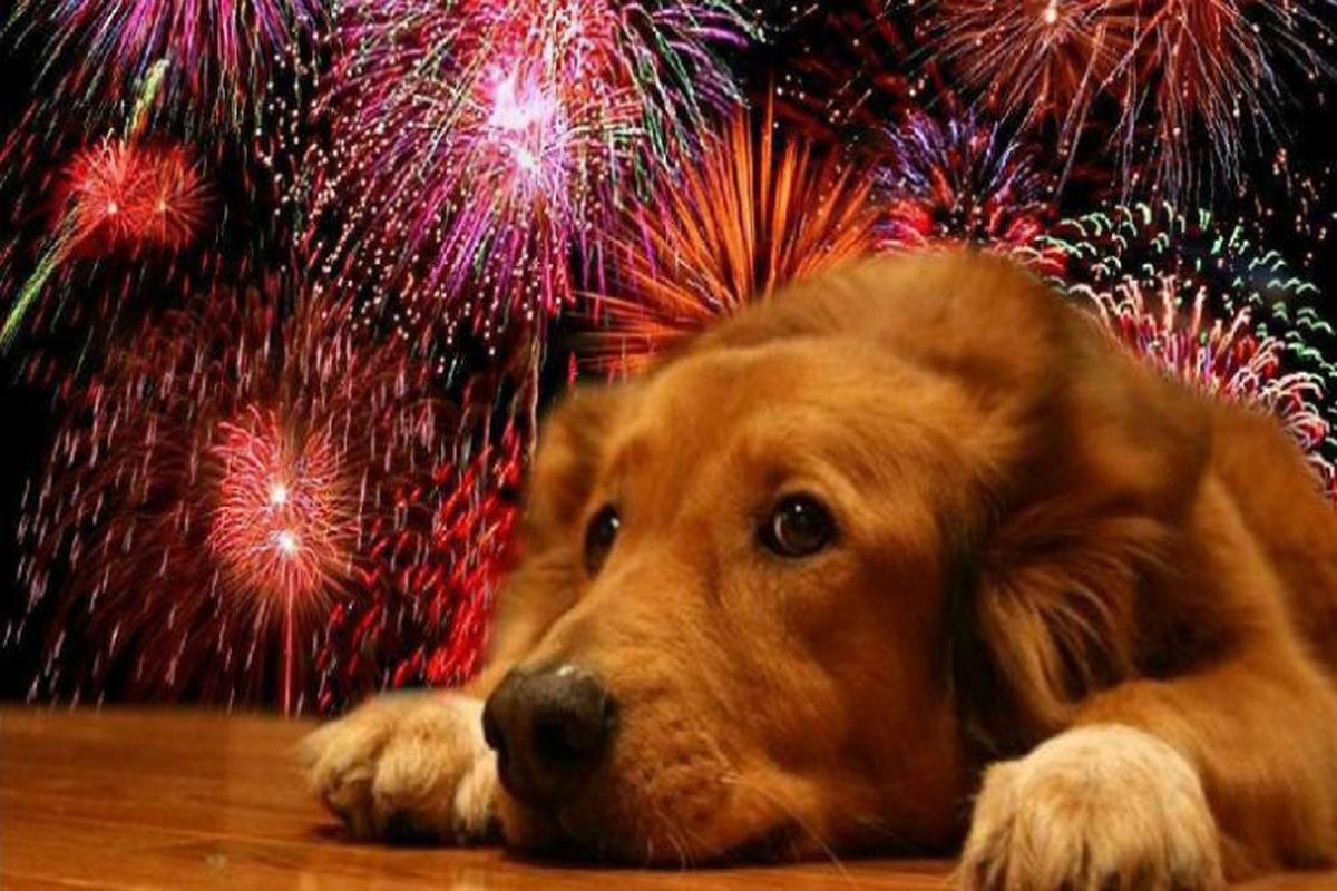 Felices Fiestas Mascotas